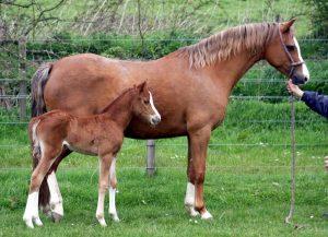 Glint & foal 1.red