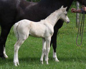Oriana foal 7R