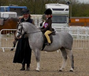 Waxwing Pastime Three Shires Show M&M Champ